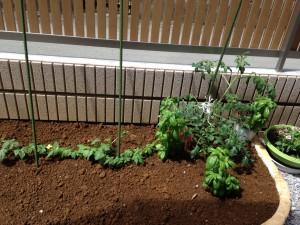 家庭菜園始めました♪新しいこともサポートがあれば始められちゃうんですね☆