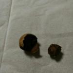 楊貴妃も愛した❰龍眼❱を食してみました。 気を補い、血を養う… 暖まりました(*゚Д゚*)!!