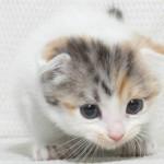 ビバ!猫ライフ2~かわいいについて本気出して考えてみたら??~