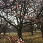 お花見の季節がやってきた!①