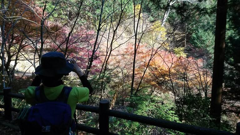 """東京都にある""""三頭山(みとうさん)""""に登ってきました 🗻"""
