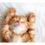 i猫リラックス