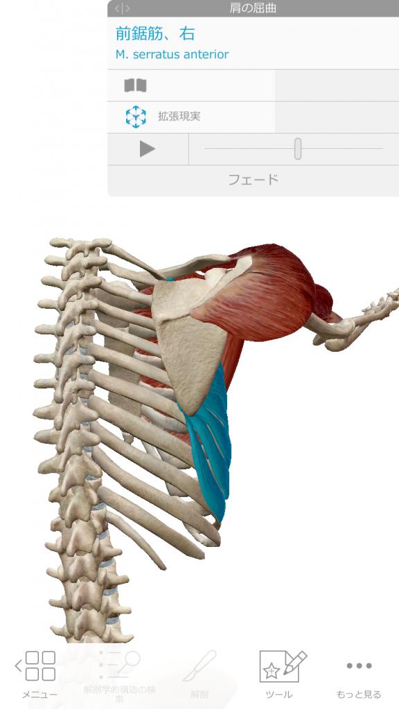 ピラティスの痛みシリーズ第3段〜よつんばいで手首が痛い‼️痛みの原因と解決策💡〜
