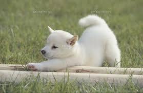 ダウンドッグ(下向きの犬のポーズ)でなりやすい形を検証!~Part2~