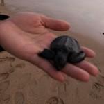 kay お知らせがあります&スリランカに行く  小さな命を海に還す