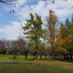 秋を感じて、パークヨガ再び