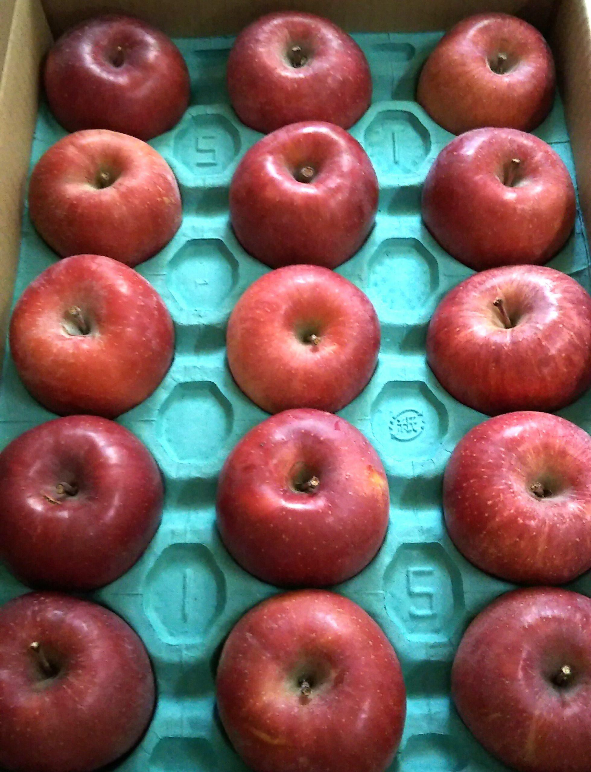 りんごと春巻きの皮で、簡単アップルパイ✨🍎🍏