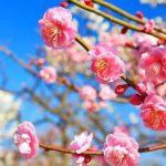 スタートの春🌸