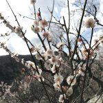 春の足音♪