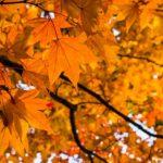 ~の秋…?